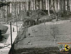 Tierpark Gysenberg 11.jpg